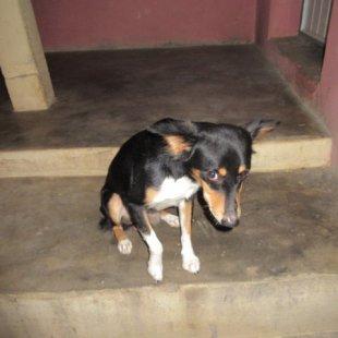 My homestay's puppy